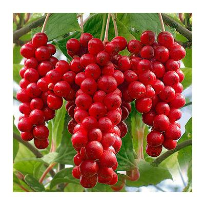Ötízű gyümölcs 2 lit. kont