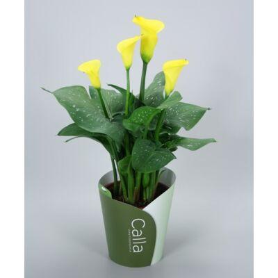 Kála 30-40 cm, sárga