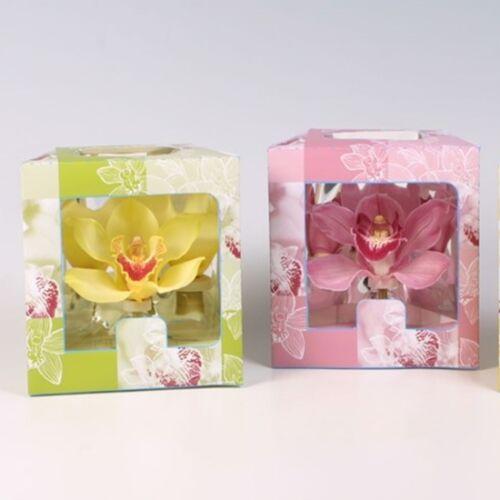 Dobozos Orchidea