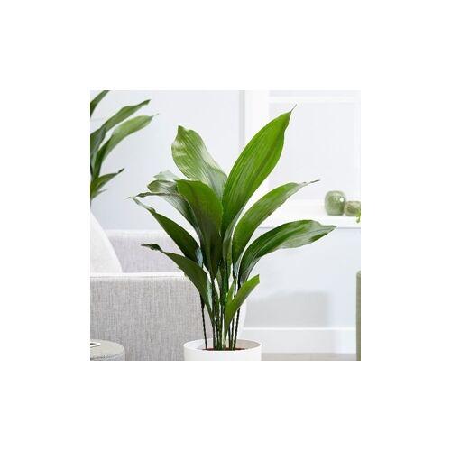 Kukoricalevél 70-80 cm